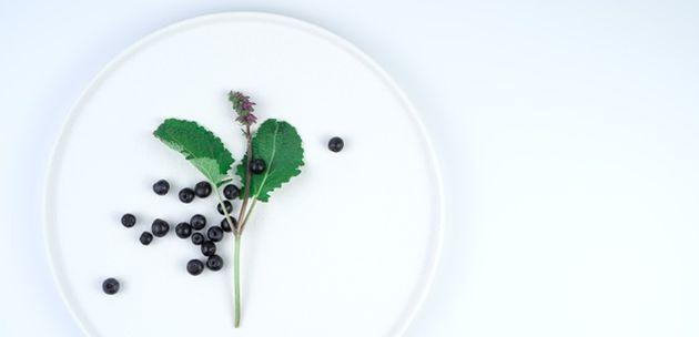 Aronija čudesna biljka sjanih ljekovitih svojstava