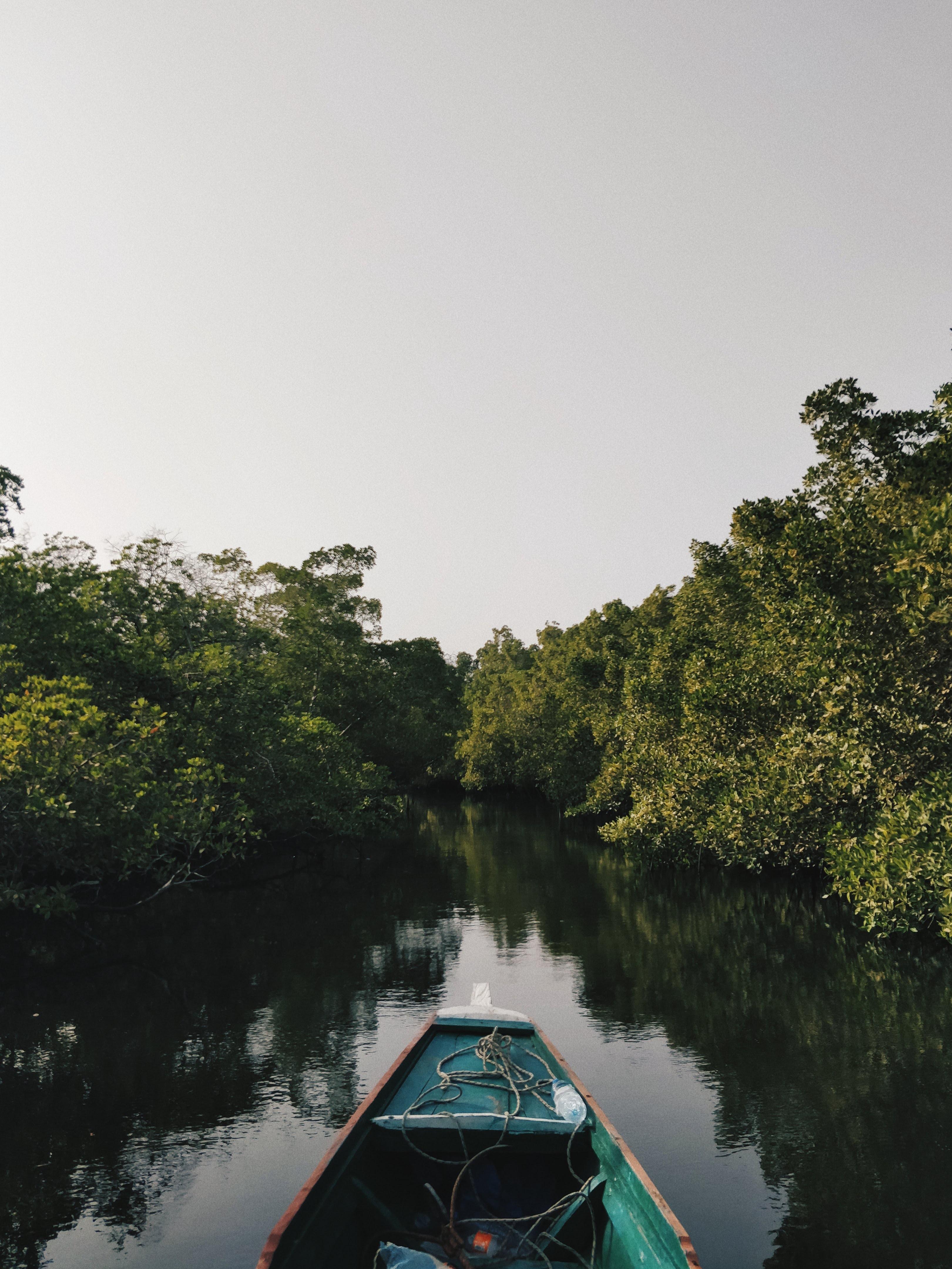 Sine Saloum Delta, Senegal