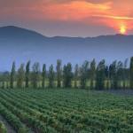 vina-grcke
