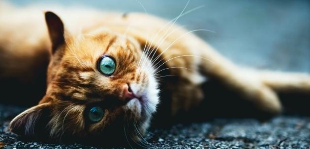 macka kao kucni ljubimac