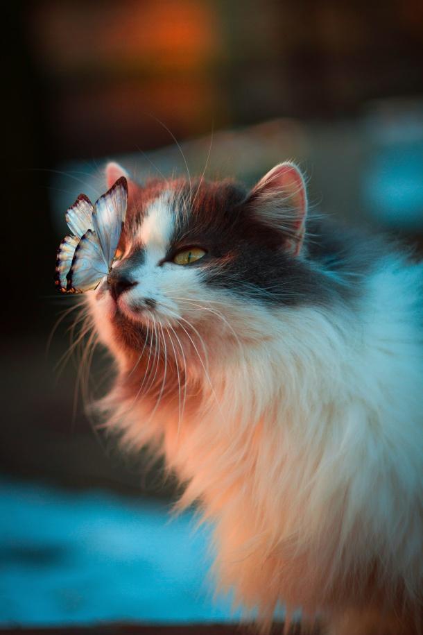 macka maca kucni ljubimac