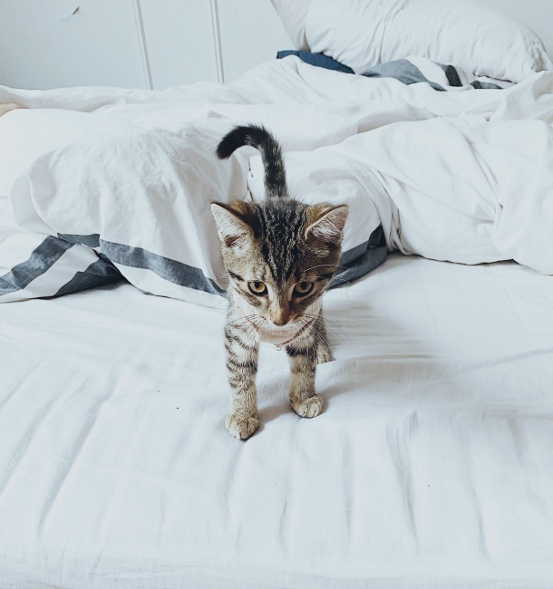 macke i pasmine macaka