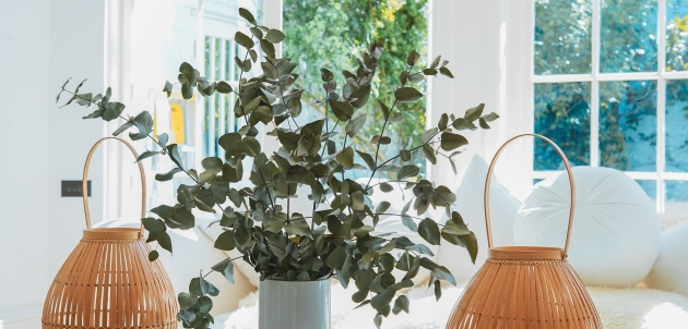 eukaliptus gripa