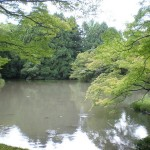 pond-with-maple-trees-kyoto-botanical-garden_l