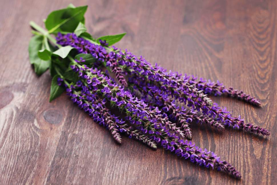 kadulja -cvijet
