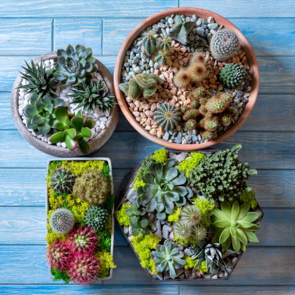 kucne biljke sadnice sadnja biljki