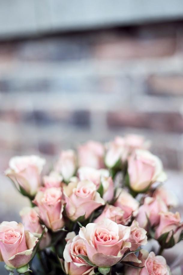ruze cvijece