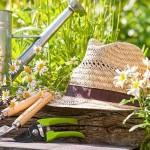 osjetljive-biljke