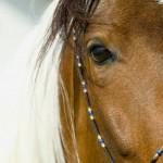konjevo oko