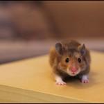 hamster_3