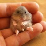 hamster_4