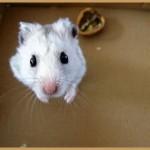 hamster_5