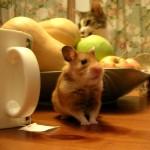 hamster_6