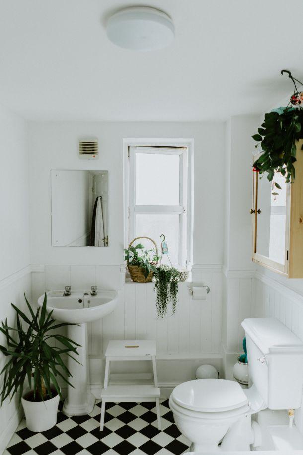 biljke u kuoanici kupaoni