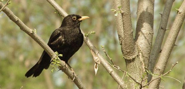 ptice-parka-maksimir-f