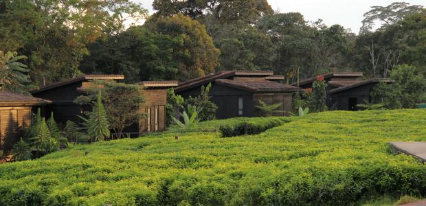 nyungwe-forest-lodge-01