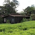 nyungwe-forest-lodge-16