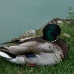 patka-u-parku