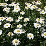 botanicki-vrt-zagreb-015