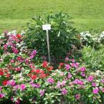 botanicki-vrt-zagreb-09