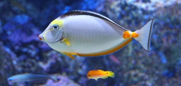 Izbor akvarija za dom i radno mjesto