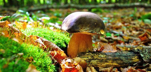 jesenske-gljive