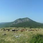 Dalmatinske Alpe