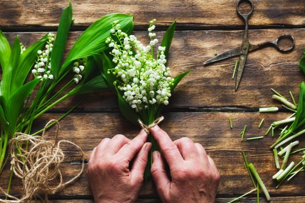 cvijet durdica durdice proljetno cvijece