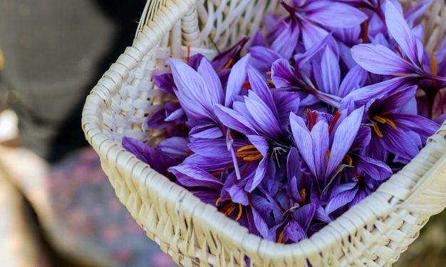 cvijet mrazovac Colchicum autumnale