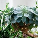 biljke-za-dom