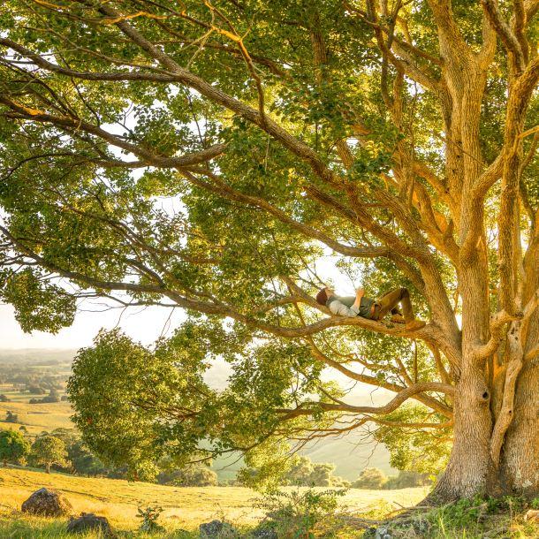 alergija priroda drvo