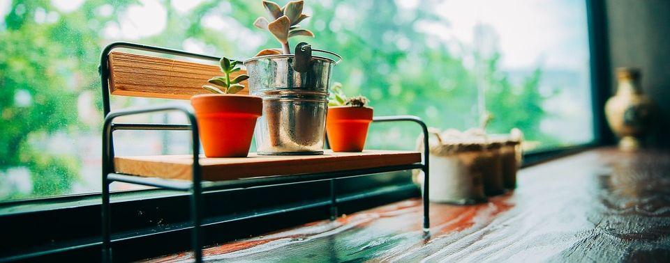 Biljke za žene