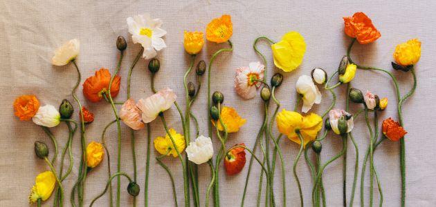 simbolika-cvijeca