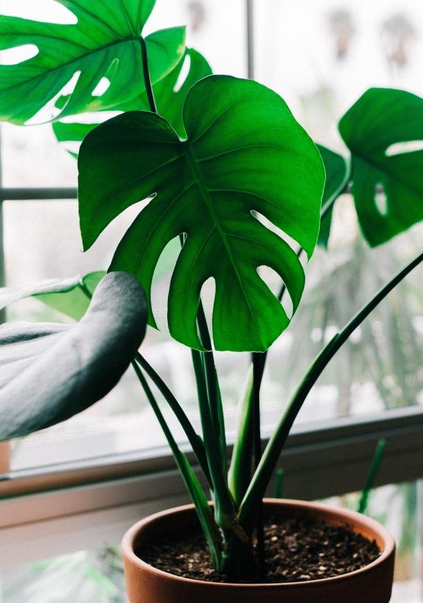 magnezij biljke biljka