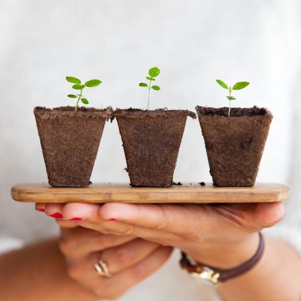 biljke sadnja zacinskog bilja