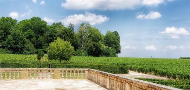 burgundija-vinogradi