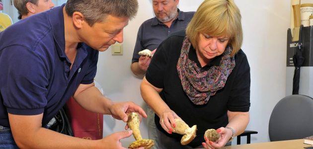 Besplatna provjera gljiva u Beču