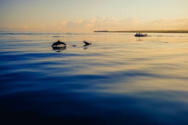ronjenje-delfini