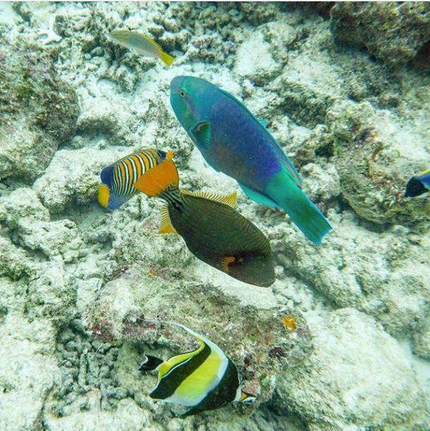 maldivi-ribe