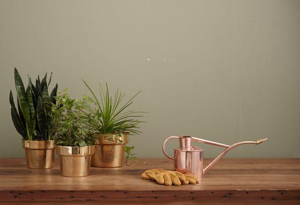biljke u kući5
