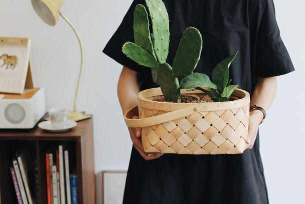 cvijeće kućno cvijeće ideje biljke kaktus