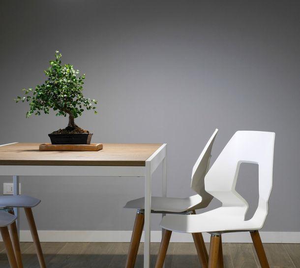 mini drvo biljke bonsai stolica interijer