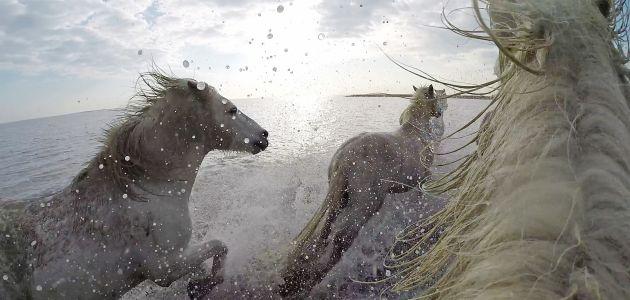 konji dan zivotinja