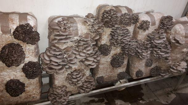 tihomir-tucman-gljive-1