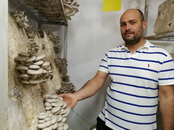 tihomir-tucman-gljive-2