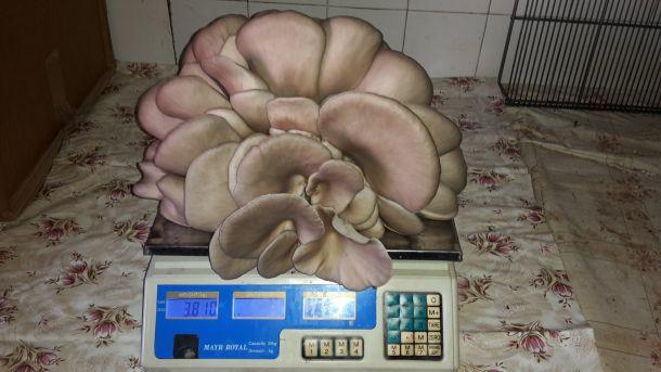 tihomir-tucman-gljive-8