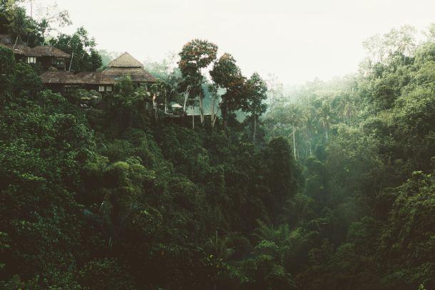 resort džungla šri lanka