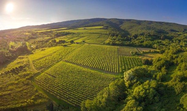 vinogradi-kutjevo