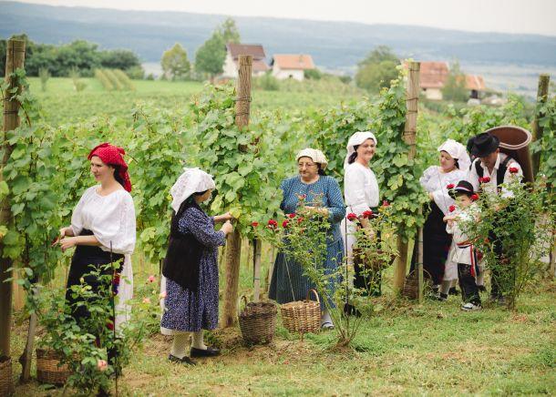 Cesta ruza i vina Pleternica 2