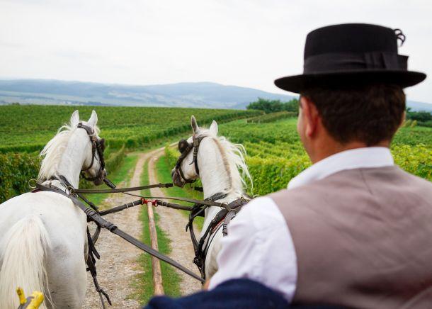 Cesta ruza i vina Pleternica 3